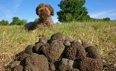 Umbria Eating italy tour: black truffle hunting and overnight stay