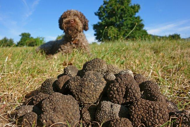 umbria, truffle hunting with food & wine tasting